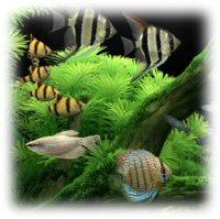 Enable dream aquarium full version serial numbers